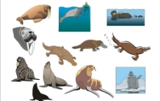精选CorelDARW海洋生物矢量图-海象、海豹、鸭嘴兽图片