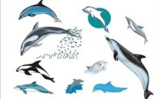 精选CorelDARW海洋生物矢量图-海豚图片