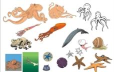 精选CorelDARW海洋生物矢量图—章鱼乌贼、海星图片