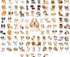 超多狗图片