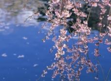 自然景观图片