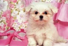 宠物小狗图片