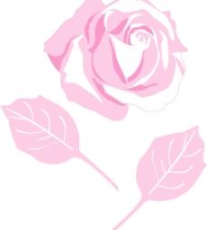玫瑰花5图片