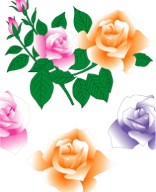玫瑰花4图片