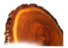 年輪木頭圖片