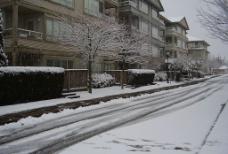溫哥華雪景2图片