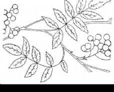 黑白花草花纹图案图片