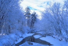 雪地森林图片