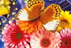 蝶恋花壁纸图片