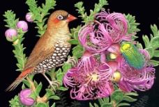一只漂亮的鸟儿图片