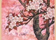 櫻花圖圖片