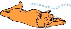 常见动物漫画0011