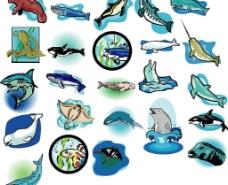 海洋生物228图片