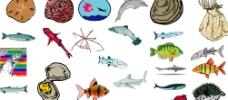 海洋生物348图片