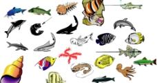 海洋生物372图片