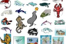 海洋生物102图片