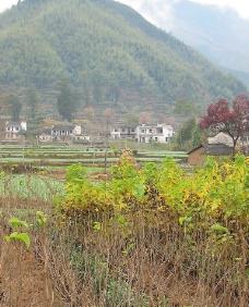 黄山摄影图片