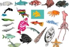 海洋生物 582图片