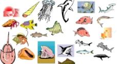 海洋生物608图片