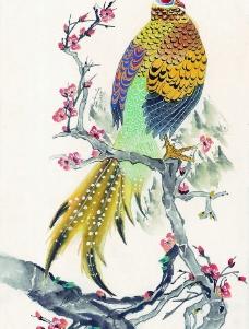 鸟类画展图片
