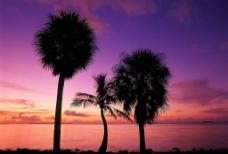 紫色海边图片