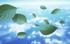 蓝天叶子图片
