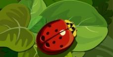 绿叶上的小甲虫图片