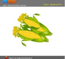 韩国矢量水果 玉米图片