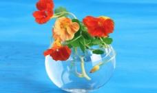 花卉艺术图片