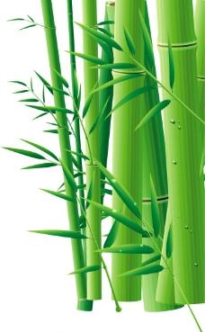 高清晰竹子图片