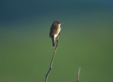 鸟素材图片