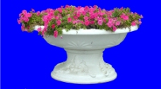 植物 花卉 分层图片