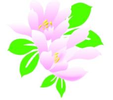 花图片,花纹,花