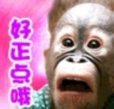 动画 猩猩图片