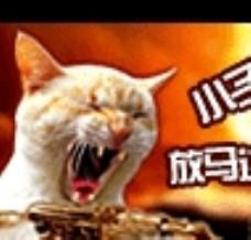 动画 猫图片