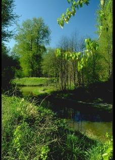 林间小河图片