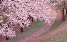 樱花园图片