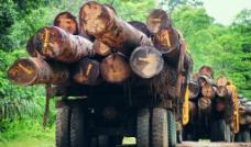 运木材的车图片
