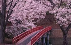 桃花与桥图片